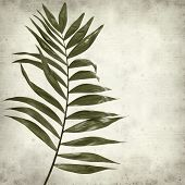 Textured Old Paper Background With Dark Green Leaf Of Chamaedorea Elegans, Parlour Palm poster