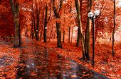 Fall Landscape. Red Fall Trees And Fall Leaves On The Wet Footpath In Park Alley After Rain. Creativ poster