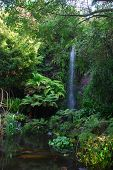 picture of garden eden  - Waterfall and the calm pond in Eden  Garden - JPG