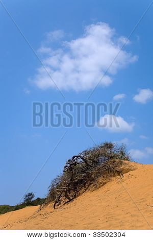 Landscape With  Dead Tree In Sand And Cloudy Skies