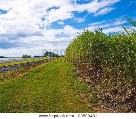 Sugar Cane Used For Ethanol Biofuel In Australia