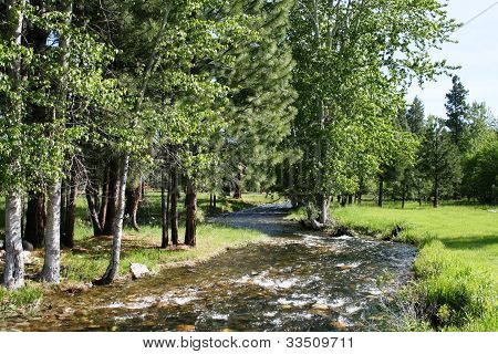 Fern Creek 2