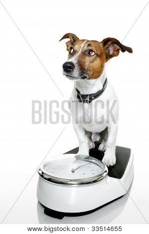 Hund-Skala