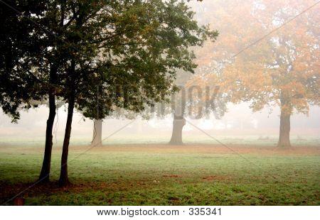 Mythical Mist