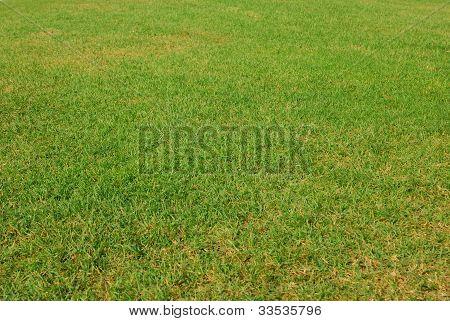 Linda grama verde