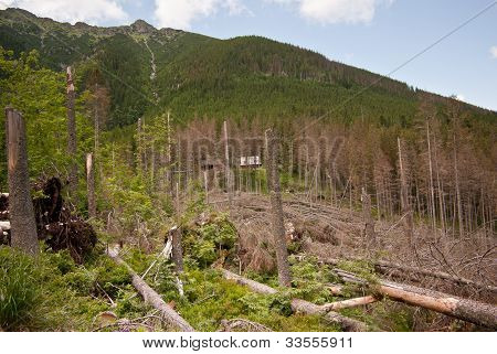 mountain landscape with felled trees