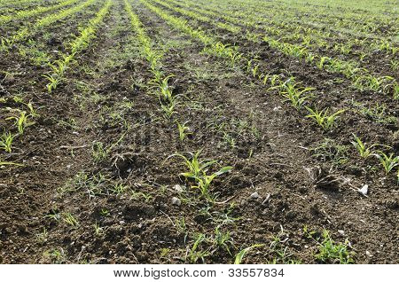 Plant Furrows In A Meadow