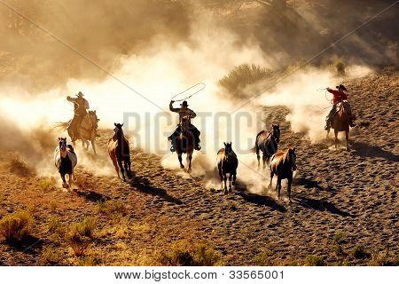 Placer de vaquero