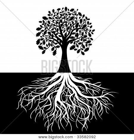 Tree with Roots on Black and white Background