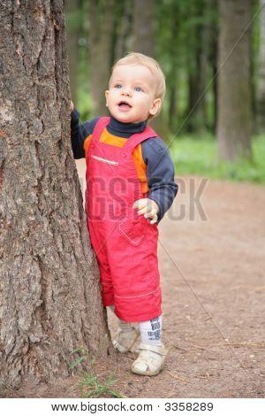 Kind hält für Baum im Park