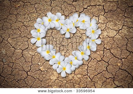 Plumeria Flowers Heart