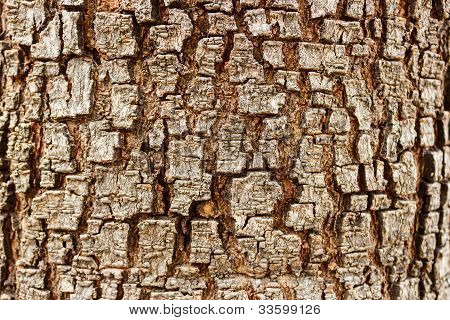 tree bark texture close up