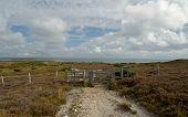 Godlingston Heath Moorland And Landscape Near Swanage, Dorset On The South Coast poster