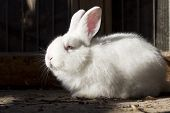 foto of rabbit hutch  - little white rabbit sitting in the barn - JPG