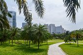 Scenic Corner Of The Park In The Center Of The Metropolis, With Tropical Vegetation, Shenzhen, China poster