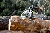 Electric Chainsaw On The Wooden Log In The Forest, Concept Of A Professional Logging With Chainsaw poster