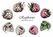 Set Of Sketchy Raspberries. Hand Drawn Vector Illustration. Isolated Elements For Design. poster