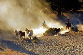 picture of wrangler  - Wranglers chasing wild horses in early morning light with dust flying everywhere - JPG