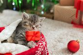 Christmas Cat Holding Gift Box Sleeping On Plaid Under Christmas Tree. Adorable Little Tabby Kitten, poster
