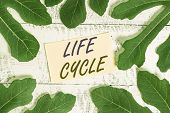 Writing Note Showing Life Cycle. Business Photo Showcasing The Series Of Changes In The Life Of An O poster