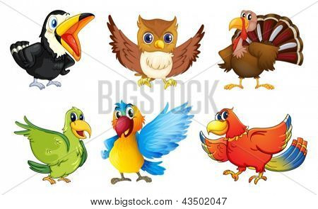 Illustration of the different kinds of birds on a white background