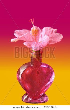 Pink Flower – Hibiskus