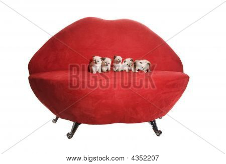 Kittens On Loveseat