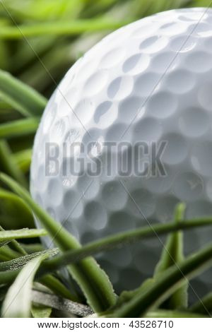 Pure White Golfball On Green Grass