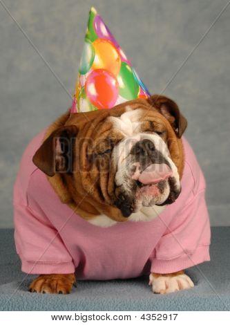 Bulldog Birthday Girl