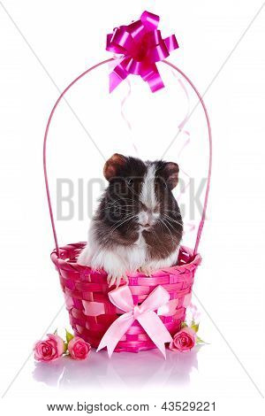 Guinea Pig In A Pink Basket With A Bow And Flowers.