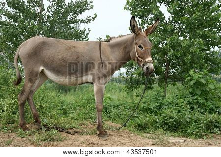 Donkey In The Fields