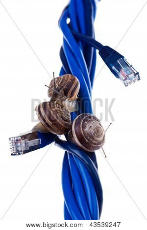 Three Snails On Blue Cables