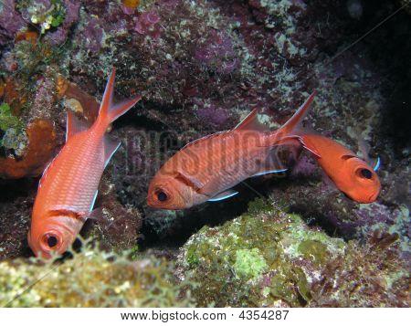 Orange fish flipping underwater