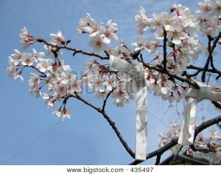 Deseos de primavera