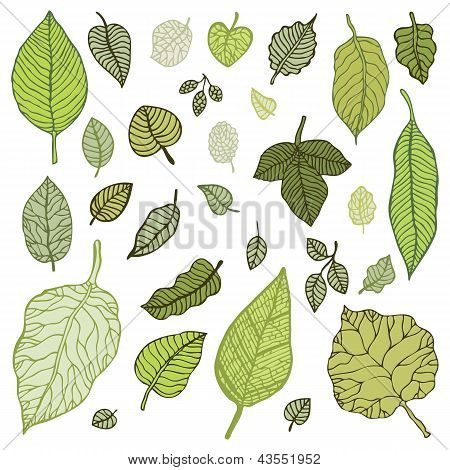 Green leaves set.  Vector Illustration.