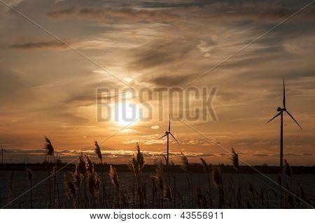 Windmill turbine