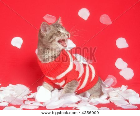 Kitten With Red Sweater And Rose Petals