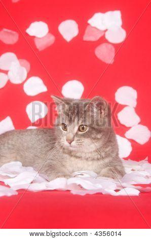 Kitten And Rose Petals
