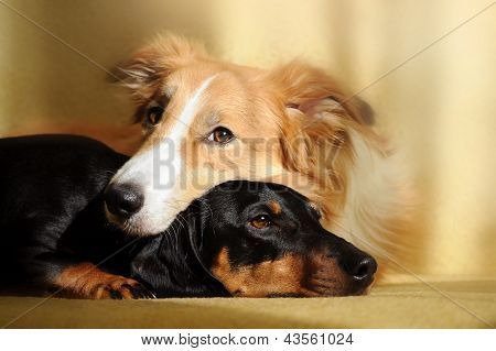 Two Cute Dog Dreaming