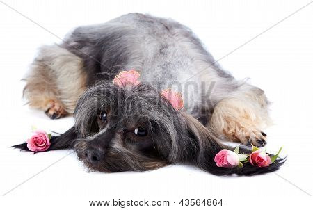 Decorative Thoroughbred Doggie And Roses.