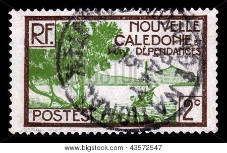 New Caledonia, Special Collectivity Of France