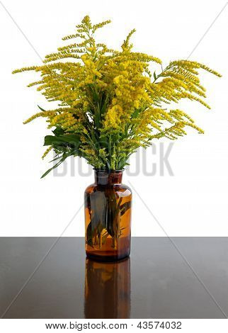 posy of blooming golden rod plant