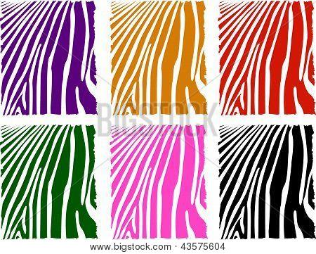 Vector Color Zebra Skin Set