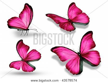 vier Rosa Schmetterling, isolated on white background