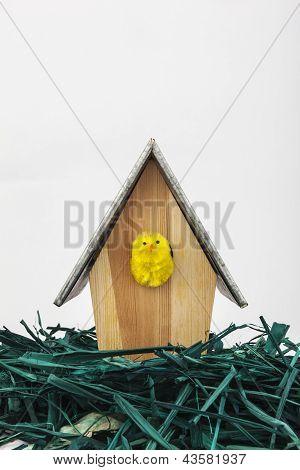 Little Chicken On Wooden Birdhouse