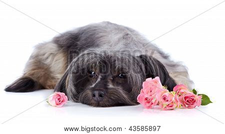 Decorative Thoroughbred Dog And Roses.