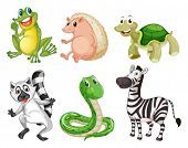 stock photo of jungle snake  - Illustration of the different species of animals on a white background - JPG