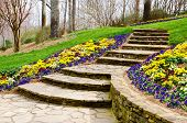 picture of stepping stones  - Steps leading to garden flowering garden path - JPG