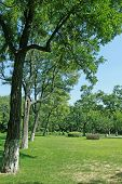 picture of afforestation  - afforestation landscape in a park in China - JPG