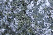 Rock Background Texture - Abstract Nature Background - White Quartz With Moss, Lichens.
